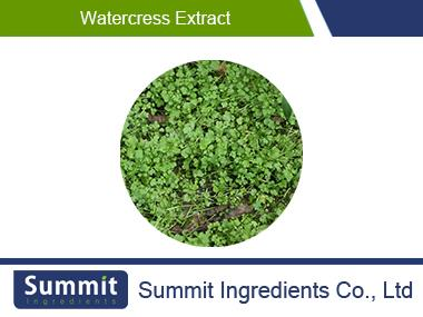 Watercress extract 10:1,nasturtium officinale,Dehydrated
