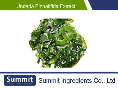 Undaria pinnatifida extract 10:1,Wakame extract,Sea mustard