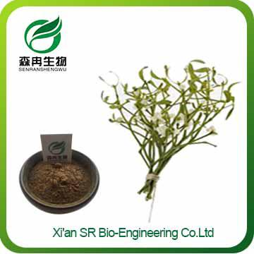 Mistletoe Extract,Factory Supply Pure Natural Mistletoe Powder,Top Quality Mistletoe Supplement