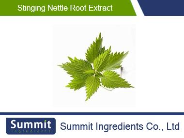 Stinging nettle root extract,Urtica Dioica,Nettle Root Extract,Dioica sp.Afghanica