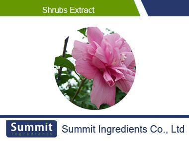Shrubs extract,Shrub Althea Flower Extract,Shrubal Flower Extract