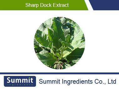 Sharp dock extract,Rumex Japonicus Houtt.,Wild Spinach Extract,Garden Sorrel Leaf,Root Of  Garden Sorrel