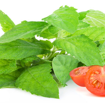 Basil Extract,  China Manufacturer Supply High Quality Basil Extract, Best Price