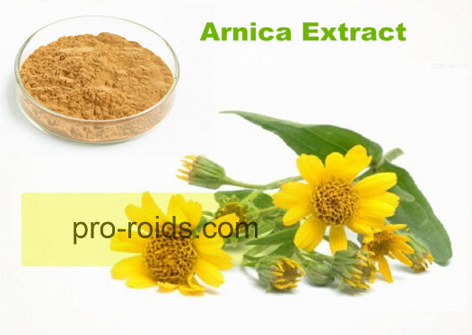 100% Natural Arnica Montana Extract pure powder