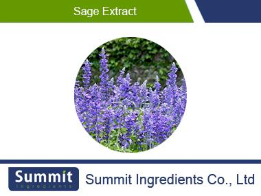 Sage extract5:1,Salvia Japonica Thunb.,Gloden-rod Extract,Salvia Officinalis Extract