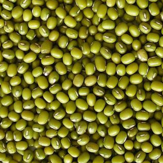 Green Mung Beans for Food and Sprouting