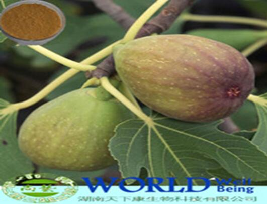 Hot Sell 100% Natural Fig Extract 10:1 Fig Extract Powder Fig Leaf Extract