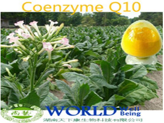 Hot Sell 100% Natural Coenzyme,Water Soluble 98% Coenzyme Q10 Powder,Coenzyme Q10