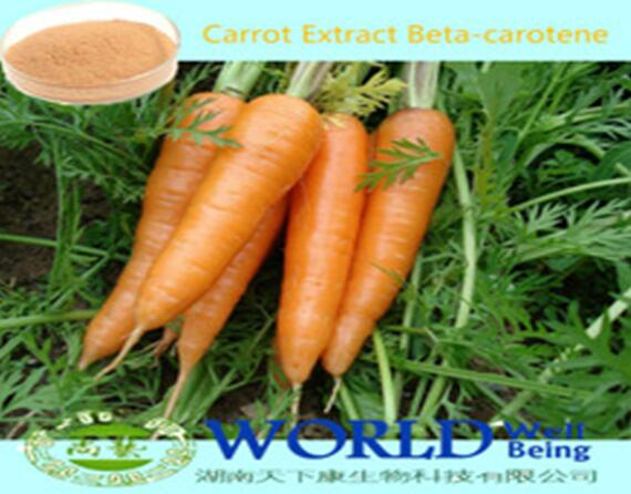 100% Natural Carrot Juice Concentrate Dried Carrot Powder Low Price