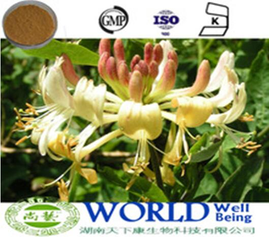 GMP Factory Dried Honeysuckle Flower Extract 10%-98%Chlorogenic Acid Honeysuckle Flower Powder Honeysuckle Extract