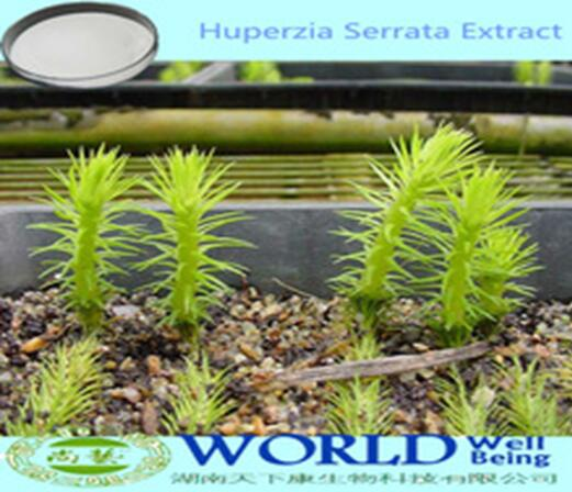 Factory Supply 1%5%10%Huperzine A Huperzia Serrata Extract/Huperzia Extract/Huperzia Serrata Extract Powder