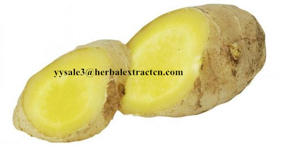 Ginger Extract,Black ginger Extract, Gingerol 5% 6% HPLC, 10:1,  blood stimulant and cleansing,nature botanical extract
