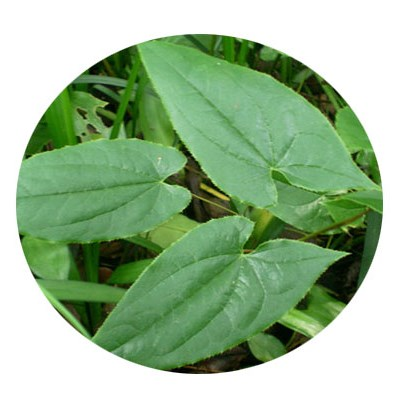 Epimedium Sagittatum Extract Icariin 60% Powder, Honey Goat Weed Extract