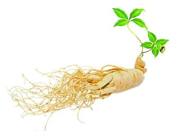 Panax Ginseng Root Extract for Cosmetic and Beverage