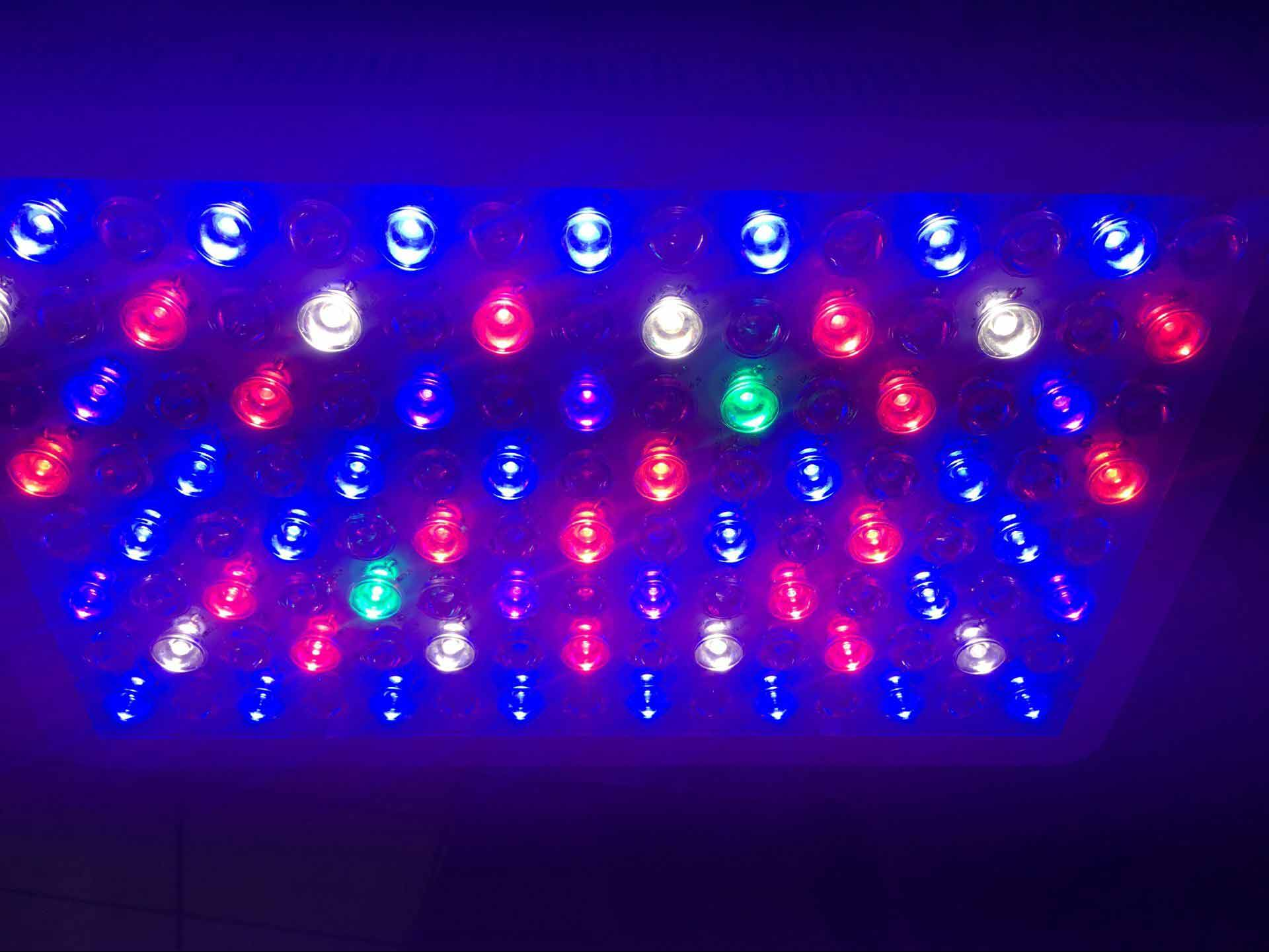 300w full spectrum led grow light for indoor plant medicine