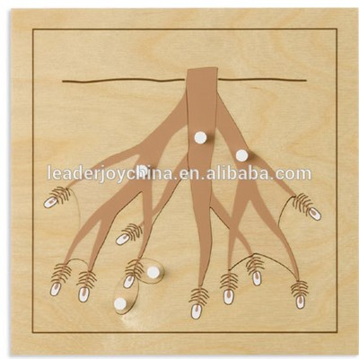 Physics Teaching Aids Model Root Puzzle