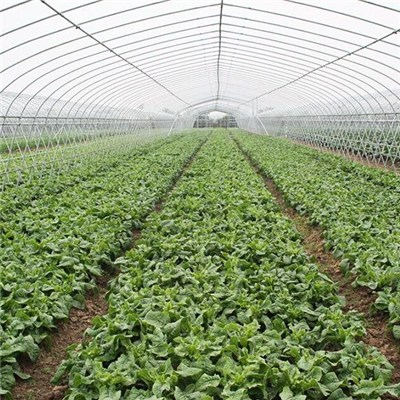 Plastic Film Galvanized Frame Tunnel Greenhouse For Vegetable Planting