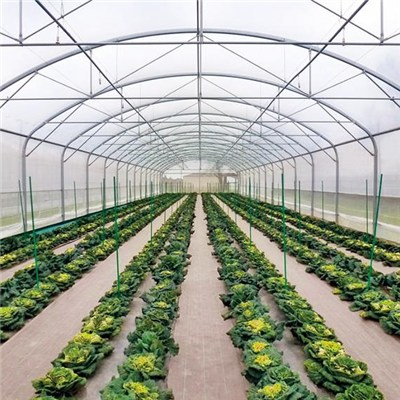 Hydroponic Greenhouse With Anti-UV 150micron Stong Windbreak Straight Walls