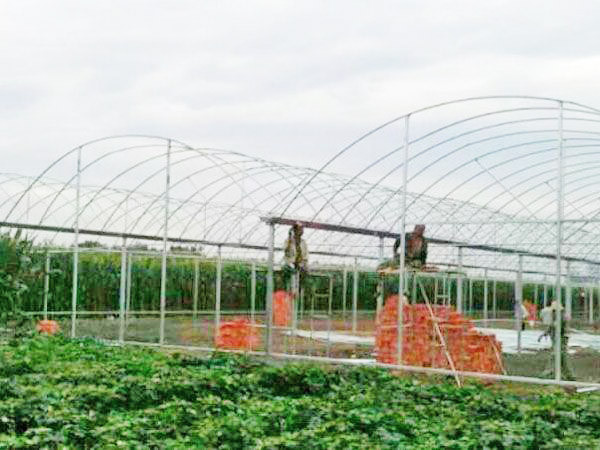 stronger greenhouse frame with stainless steel skeleton