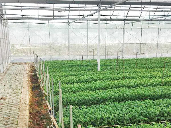 Agriculture tunnel greenhouse with plastic film