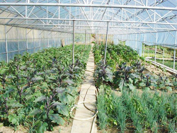Agriculture polycarbonate commercial greenhouse with hydroponic system