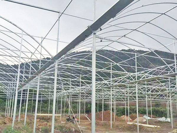 useful agricultural sunlight greenhouse to hot sale