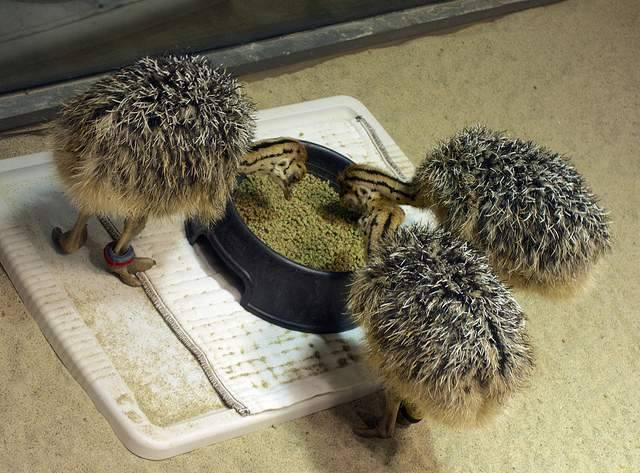 Buy Fertilized Ostrich chicks and Ostrich Eggs for sale