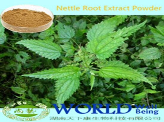 Hot Sell Nettle Extract Nettle Root Extract Powder Beta-sitosterol 1%-3% Low Price
