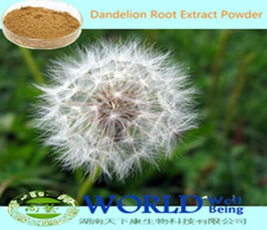 100% Natural Dandelion Root Extract Powder 20%Flavonoids  Dandelion Extract Low Price
