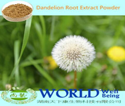 Hot Sell Organic Dandelion Root Extract Powder 20% Flavonoids Dandelion Root Extract Low Price