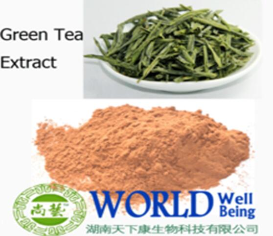 Organic green tea polyphenol anti-cancer antioxidation extract powder Green Tea Polyphenols 95%