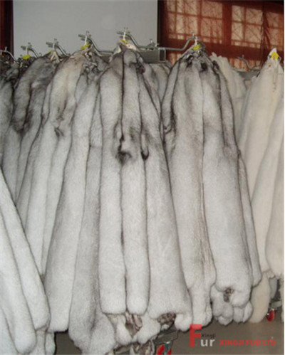Blue Fox Fur Skin