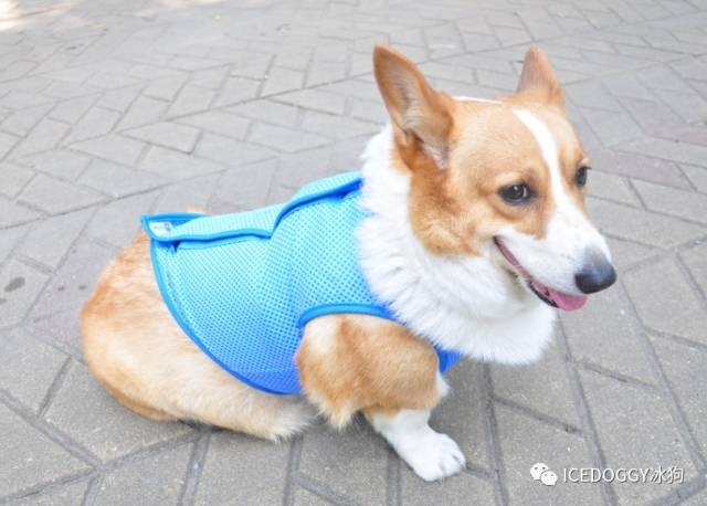the Cool clothes and Pet cold suitof Qingdao beyonis the in