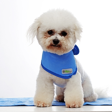 Qingdao beyonspecializes in  Pet maskand pet ice coat servi