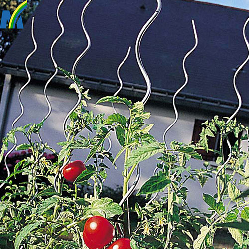 1.8m Length 6mm Diameter Galvanized Tomato Spiral Rod/Tomato Spiral Stick /Tomato for Garden