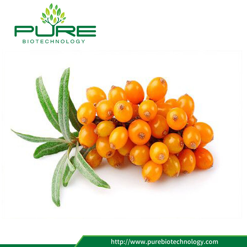 Hot selling organic sea buckthorn berry with low price