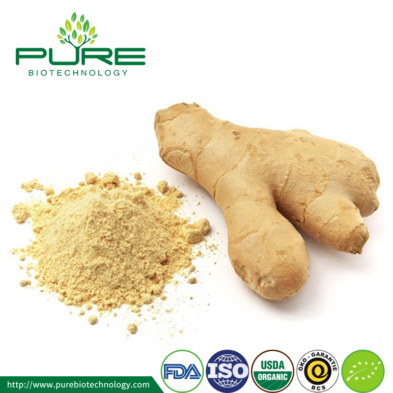 Dried organic ginger powder price Ginger