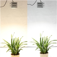 Give these over Hydroponic lamp a try, you will be amazed