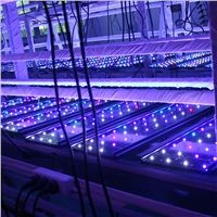 Our exquisite work will guarantee quality of led aquarium l