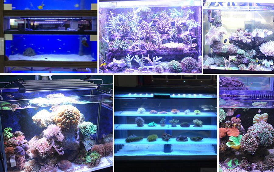 Valued major manufacturers, chooseled aquarium light