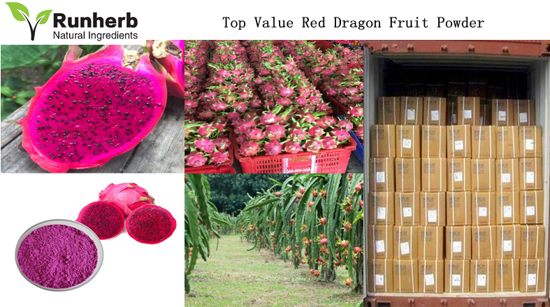 Red Dragon Fruit Powder