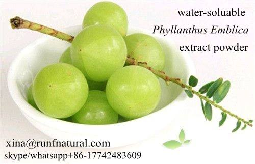 Phyllanthus emblica Extract powder