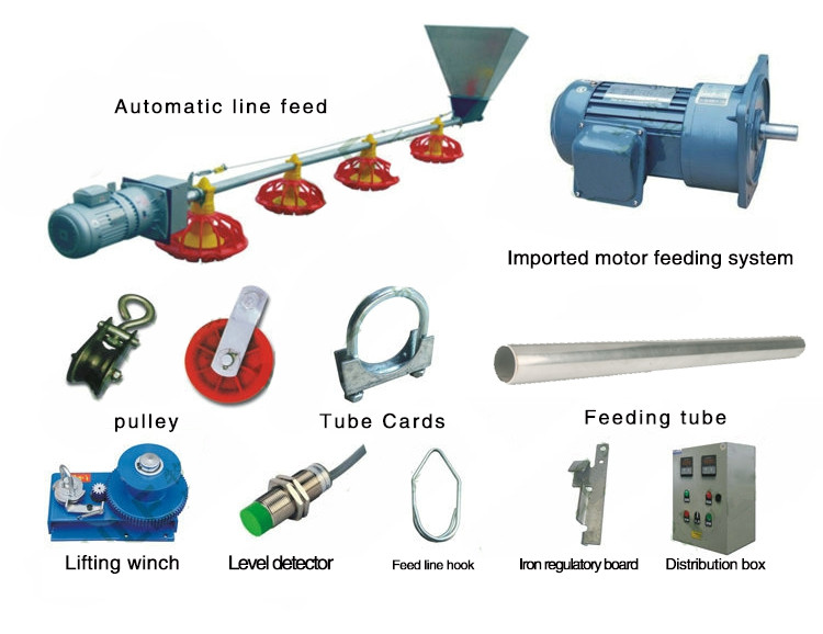 Broiler Chicken Feeding System and Chicken Farm Equipment