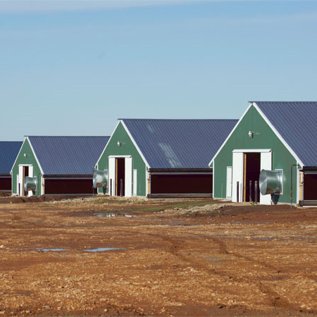 China Steel Structure Prefab Poultry House Poultry Farming