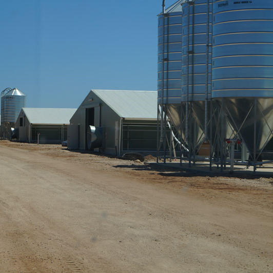 Commercial Automatic Poultry Farm Shed with Equipment for Broilers