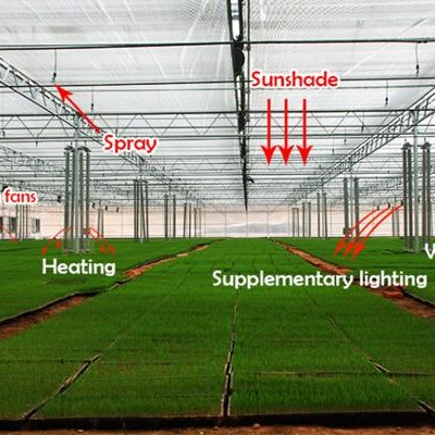 Agricultural Glass Greenhouse For Vegetable