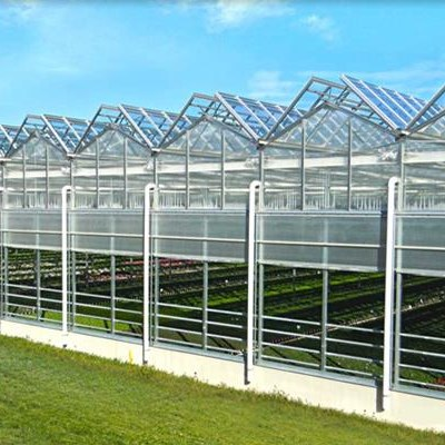 Sightseeing Venlo Tempered Glass Greenhouse