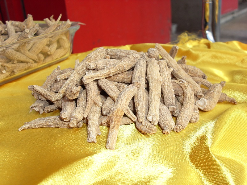 American Ginseng P.E Supplier