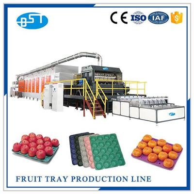 Fruit Tray Production Line