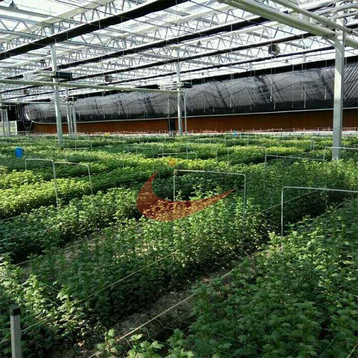 Commercial Agricultural Glass Greenhouse for Flower and Vegetables  Glass Greenhouse  Vegetables Greenhouse manufacturer